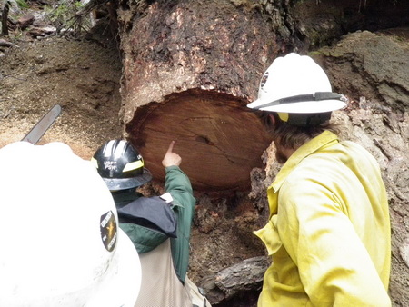 Photo of Frank Lake showing Ukonom Hotshots Crew the desired fire scars on stump sample; Jeff Crawford and Scott Mensing extracting lake sediment core for pollen and charcoal analysis. USDA Forest Service