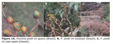Photo of Examples of rust on various tree species. USDA Forest Service