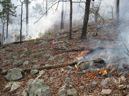 Photo of Fire approaching study plots during a winter controlled burned in the Ouachita Mountains. USDA Forest Service