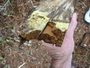 Board treated with copper-based preservatives showing premature signs of rot caused by copper-tolerant brown rot fungi. USDA Forest Service