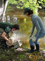 Photo of Forest Service technician Tina Ciaramitaro and biological aide Tom Baweja submerge infested black ash logs in a stream. USDA Forest Service