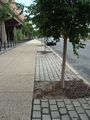 Stormwater tree trench and pervious pavers. USDA Forest Service