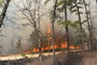 Photo of Period of high fire-induced atmospheric turbulence observed during a prescribed fire conducted in the New Jersey Pine Barrens on 20 March 2011. USDA Forest Service