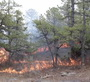 Photo of A prescribed fire in a pitch pine stand in the Pinelands of New Jersey.  Prescribed fires consume primarily forest floor and understory vegetation, resulting in rapid recovery following burns. USDA Forest Service