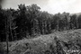 Photo of Whole-tree harvest in 1935. Bartlett Experimental Forest, Bartlett, NH.  USDA Forest Service