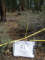 Photo of A study site in the Tahoe National Forest, eight years after prescribed fire. USDA Forest Service.