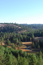 Photo of Across forestlands on the West Coast, tree seedlings are migrating to areas cooler than the current range of mature trees. USDA Forest Service