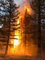 Photo of 2012 Wenatchee Complex, Okanogan-Wenatchee National Forest, WASH.  Kari Greer - Creative Commons