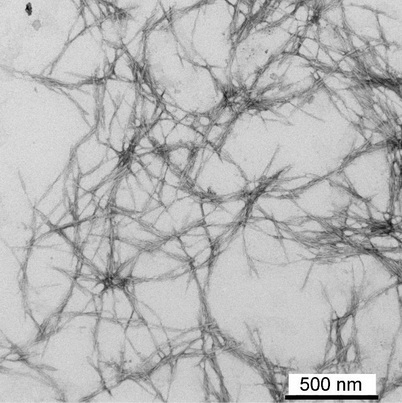 Photo of Researchers are developing improved methods for processing cellulose nanofibrils. Rob Sabo, U.S. Department of Agriculture Forest Service.