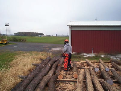 Photo of Small-diameter logs, especially when straight, can yield lumber volumes comparable to larger diameter logs. Jan Weidenbeck, U.S. Department of Agriculture Forest Service.