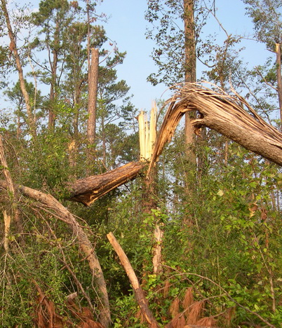 Photo of Storm damage to timber. Donald L. Buckner, Diversified Consulting Services.