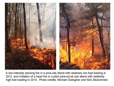 Photo of A low-intensity backing fire in a pine-oak stand with relatively low fuel loading in 2012, and initiation of a head fire in a pitch pine-scrub oak stand with relatively high fuel loading in 2014. Michael Gallagher and Nick Skowronski, U.S. Department of Agriculture Forest Service.