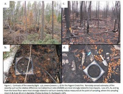 Photo of Figure 1. Contrasts of fire severity (light: a,b; severe (severe: c, d) for the Pagami Creek Fire. Remotely-sensed estimates of fire severity such as the relative difference normalized burn ratio (RdNBR) are most strongly related to tree impacts. Loss of C, N, and Hg from the forest floor were most strongly related to soil burn severity indices measured at the point of sampling, where the sampling ring in b & d are 30 cm in diameter. Brian Sturtevant, U.S. Department of Agriculture Forest Service.