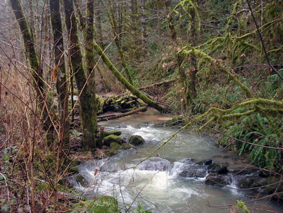 Photo of Smith River, Oregon. Loretta Ellenburg, U.S. Department of Agriculture Forest Service.