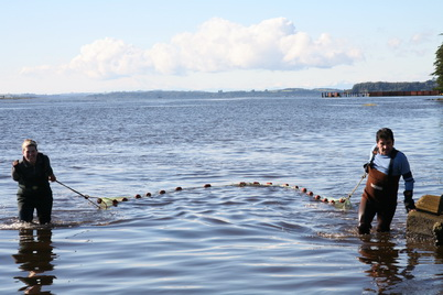 Photo of Researchers pull a beach seine in Reloncovi estuary, southern Chile, while fishing for native galaxiid juveniles. Ginger Penaluna, U.S. Department of Agriculture Forest Service.