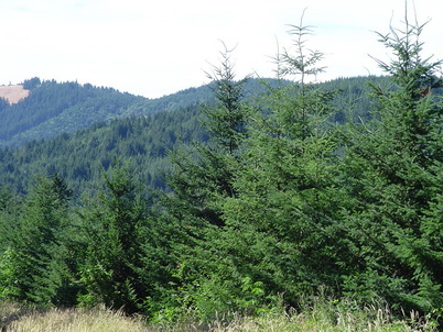 Photo of Managed forest land in western Oregon. A carbon offset sales program could encourage forest landowners to manage in ways that increase the amount carbon stored on their land. Jeff Kline, U.S. Department of Agriculture Forest Service.