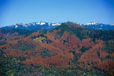 Photo of An aerial view of tree mortality on the Sierra National Forest, California. Steve Dunsky, U.S. Department of Agriculture Forest Service.