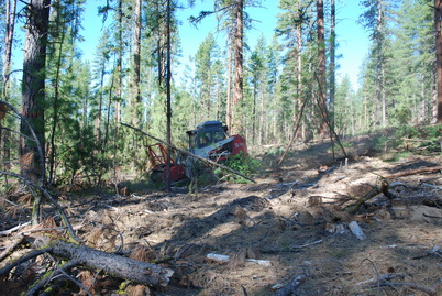 Photo of A mechanical fuels reduction treatment on a study site in the Pringle Falls Experimental Forest. Rhonda Mazza, U.S. Department of Agriculture Forest Service.