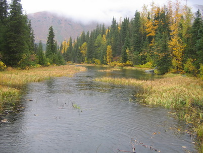 Photo of A flooded stream on the Chugach National Forest. John S. Lang, U.S. Department of Agriculture Forest Service.