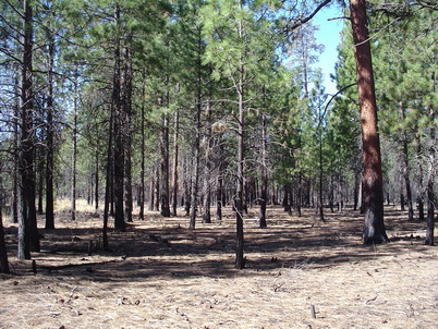 Photo of A prescribed burn near Sisters, Oregon. Jeff Kline, U.S. Department of Agriculture Forest Service.