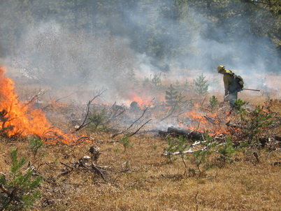 Photo of Prescribed fires, like this one in El Dorado National Forest,  can reduce wildfire fuels. U.S. Department of Agriculture Forest Service.
