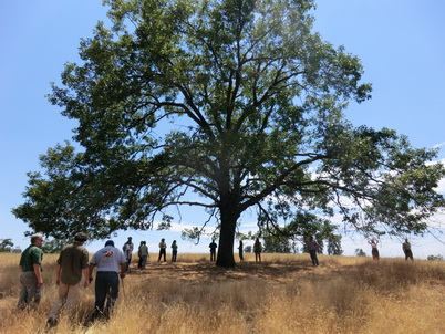 Photo of Tribal acorn gatherers and scientists gather underneath an actively tended black oak tree near North Fork, California. Jonathan Long, U.S. Department of Agriculture Forest Service.