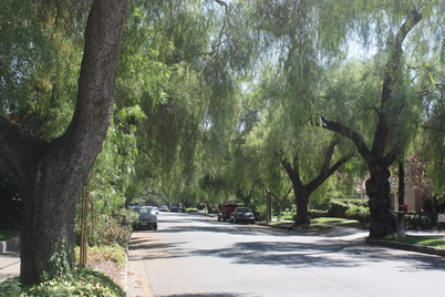 Photo of Street trees lining California's roadways provide $1 billion in services each year.  U.S. Department of Agriculture Forest Service.