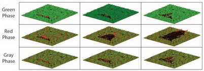 Photo of FIRETEC simulations of fire perimeter and fuel consumption through time for pinyon-juniper woodland during the green, red, and gray phases of a pinyon Ips bark beetle attack. Time proceeds from left to right. U.S. Department of Agriculture Forest Service.