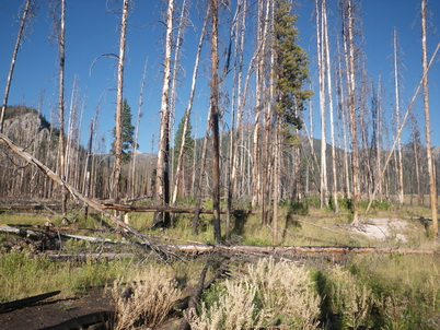 Photo of One year after the 2011 Hammer Creek fire in the Bob Marshall Wilderness, part of the Crown of the Continent Ecosystem in Montana. Sean Parks, U.S. Department of Agriculture Forest Service.