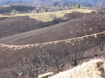 Photo of Straw bales to be spread on the most erodible parts of U.S. Bureau of Land Management-administered land following the 2015 Butte Fire near Sacramento, Calif. U.S. Department of Agriculture Forest Service.