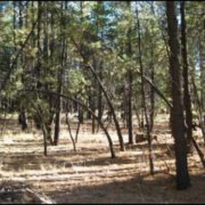 Photo of Site at Coconino National Forest, which is representative of open understories typical of southwestern forests. U.S. Department of Agriculture Forest Service.