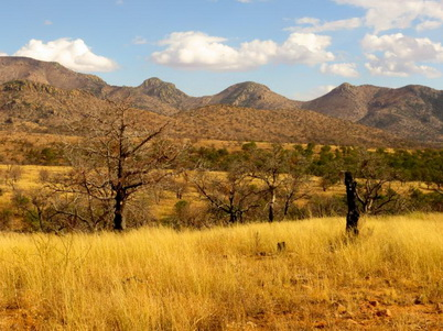 Photo of The Santa Rita Mountains in Arizona, a Madrean Sky Island range, are home to unique bird species. Jamie Sanderlin, U.S. Department of Agriculture Forest Service.