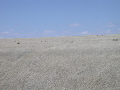 Photo of Kiowa National Grassland, southern Great Plains, during drought conditions. U.S. Department of Agriculture Forest Service.