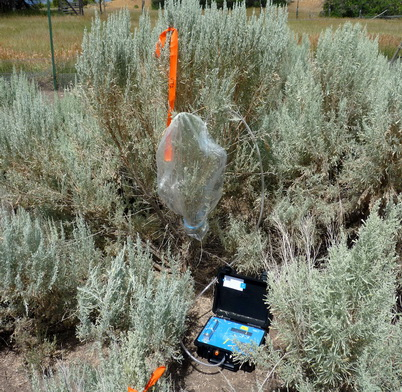 Collecting Sagebrush Volatiles Odors In A Common Garden Near Ephraim Utah U S Department Of Agriculture Forest Service
