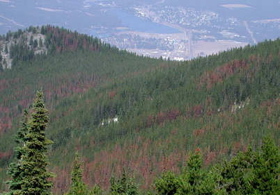 Photo of Forest impacted by the mountain pine beetle. U.S. Department of Agriculture Forest Service.