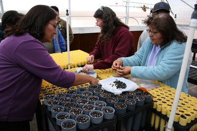 Photo of School teachers sow paintbrush and yucca seeds in the new Cultural Plant Propagation Center at the Moencopi Day School in Tuba City, AZ. Jeremy Pinto, U.S. Department of Agriculture Forest Service.