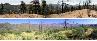 Photo of Forest understory on a severely burned ridgetop one month after the 2002 Hayman Fire and 10 years later. Paula Fornwalt and Merril Kaufmann, U.S. Department of Agriculture Forest Service.