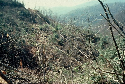 Photo of Watershed 7 following harvest using timber cutting and yarding with mobile cable system January 1977–June 1978. Wayne Swank, U.S. Department of Agriculture Forest Service.