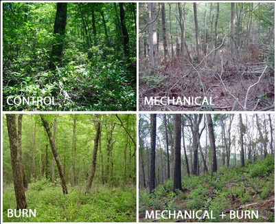 Photo of Each of the treatments created different stand structure and fuel characteristics. The control left an understory thick with shrubs. The mechanical treatment removed shrubs but created large loadings of woody fuels that required 5 to 7 years to decompose. Mitchell Smith and Gregg Chapman, U.S. Department of Agriculture Forest Service.