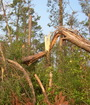 Storm damage to timber. Donald L. Buckner, Diversified Consulting Services.