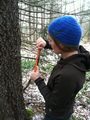Photo of Alexandra Kosiba collecting a woody increment core from a mature red spruce tree. Luke Ingram (University of Vermont Affiliate), University of Vermont.