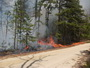 Example of prescribed fire adjacent to a forest gap in the New Jersey Pine Barrens. Warren E. Heilman, U.S. Department of Agriculture Forest Service.