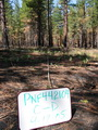 Photo of One year after a prescribed fire at a study site on the Plumas National Forest, California. Joe Larson, U.S. Department of Agriculture Forest Service.