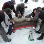 Photo of Jake Ivan (CO Parks & Wildlife) and technicians instrumenting an anesthetized Canada lynx. U.S. Department of Agriculture Forest Service.