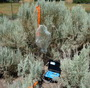 Photo of Collecting sagebrush volatiles (odors) in a common garden near Ephraim, Utah.  U.S. Department of Agriculture Forest Service.