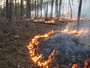 Photo of A prescribed fire being ignited under controlled conditions to promote open woodland habitat suitable for endangered species in the Ouachita Mountains. Virginia McDaniel, U.S. Department of Agriculture Forest Service.