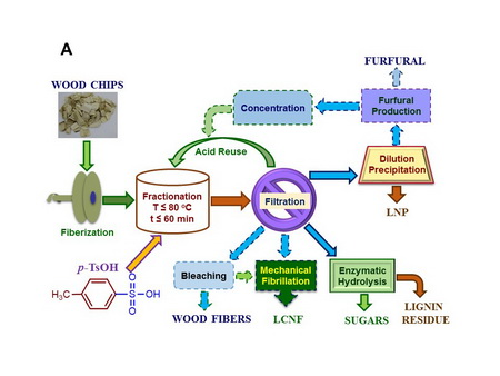 Photo of Fig. 1  General experimental flow diagram of p-TsOH fractionation of wood for producing fibers, cellulose nanofibrils (LCNF), lignin nanoparticles (LNP), sugar/biofuel, and furfural. JY Zhu, USDA Forest Service Fig. 2 Application p-TsOH fractionation for producing lignin containing cellulose nanofibrils (LCNF) and lignin nanoparticles (LNP).