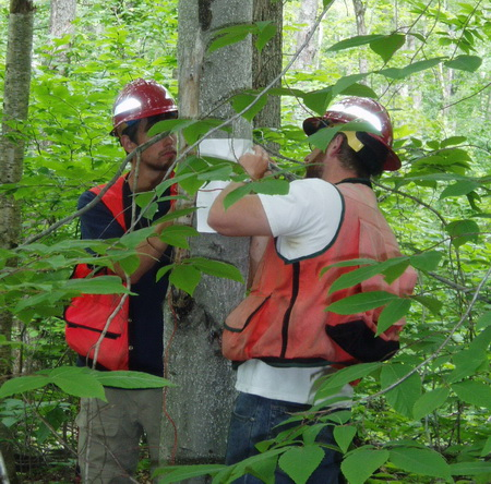 Photo of Hiawatha National Forest personnel work together to set up a test for scale-resistance on a beech tree as part of a training workshop run by FS researchers.  Genetic markers identified in recent studies may allow resistant trees to be selected without using the type of testing shown here, which can take up to a year.