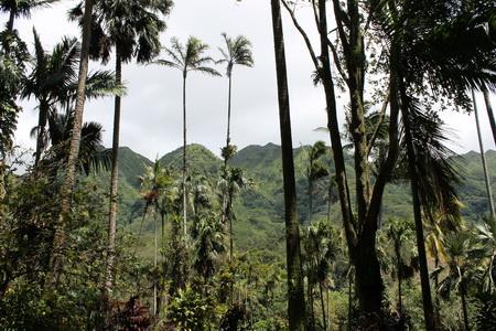 Photo of Hawaii's native forest, Oahu, Hawaii.