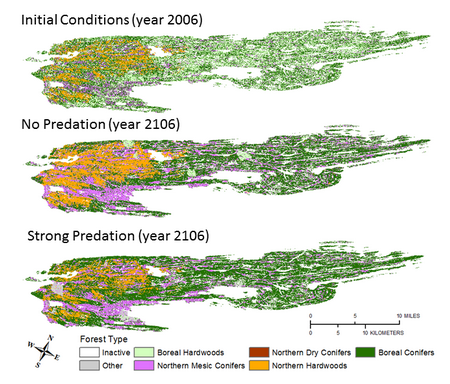 Photo of Figure 1. Isle Royale National Park (upper left) is home to populations of wolves and moose (upper right, data from Vucetich and Peterson 2015). Simulated trends (+/- 90 percent confidence intervals) in moose population density (lower left), and available forage biomass/moose carrying capacity (lower right) for the three predation scenarios. Actual moose population estimates for Isle Royale from 2006-2015 (black) are provided for reference. Figure 2. Simulated changes in forest types at Isle Royale after 100 years of no predation vs strong predation rates.